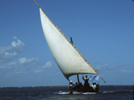 Sailing a Dhow
