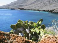 Galapagos Biodiversity