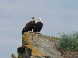 Eagle sightings